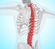 3d illustration of Human skeleton back pain. 3d llustration. Human skeleton with back pain, Skeleton Anatomy concept Royalty Free Stock Photo