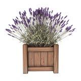 3D Illustration Lavender Planter on White Stock Photos