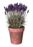 3D illustration Lavender Pot on White Stock Images