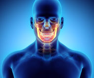 3D illustration of Mandible, medical concept. Royalty Free Stock Photos