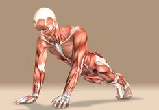 3d illustration of a medical male figure exercising Royalty Free Stock Photography