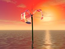 Mysterious huge flower Royalty Free Stock Photo