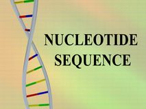 NUCLEOTIDE SEQUENCE concept. 3D illustration of NUCLEOTIDE SEQUENCE script with DNA double helix,  on colored background Royalty Free Stock Photos