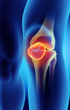 3D illustration of Patella, medical concept. 3D illustration of Patella - Part of Human Skeleton Royalty Free Stock Image