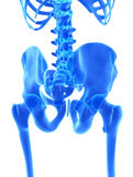 3D illustration of Pelvis, medical concept. Royalty Free Stock Photos
