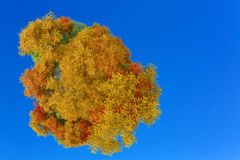 3D illustration of planet with autumn trees Royalty Free Stock Photos