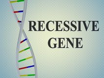 RECESSIVE GENE concept. 3D illustration of RECESSIVE GENE script with DNA double helix , isolated on pale blue gradient Royalty Free Stock Photo