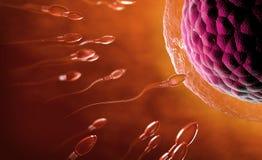 Transparent sperm cells swimming towards egg cell. 3d illustration of red transparent sperm cells swimming towards egg cell or ovum stock photos
