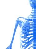 3D illustration of shiny blue skeleton system. Stock Photography