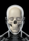 3D illustration of skull anatomy - part of human skeleton. Royalty Free Stock Photos