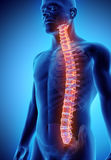 3D illustration of Spine, medical concept. 3D illustration of Spine - Part of Human Skeleton Stock Images