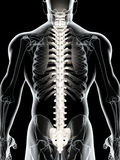 3D illustration of Spine, medical concept. 3D illustration of Spine - Part of Human Skeleton Stock Photography