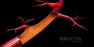 3d Illustration of vein without blood cell, isolated black.  Stock Photography