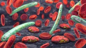3d Illustration von Blutzellen, Plasmodium, der Malaria verursacht Lizenzfreies Stockbild