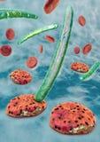 3d Illustration von Blutzellen, Plasmodium, der Malaria verursacht Stockfoto