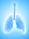 3D Illustration von Lungen, medizinisches Konzept vektor abbildung
