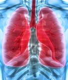 3D Illustration von Lungen, medizinisches Konzept Lizenzfreie Stockfotografie