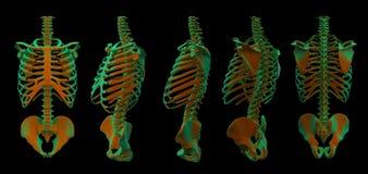 3d illustration of walking fire skeleton. 3d illustration of  walking fire skeleton by X-rays on background Royalty Free Stock Image