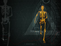 3d illustration of  walking fire skeleton by X-rays on backgroun. D Royalty Free Stock Image