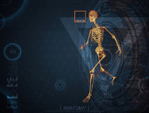 3d illustration of  walking fire skeleton by X-rays on backgroun. D Stock Image