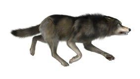 3D Illustration Wild Wolf on White Stock Photos
