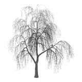 3D Illustration Willow on White Stock Images
