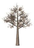 3D illustrazione Cherry Tree su bianco Fotografie Stock
