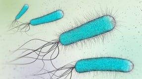 3d ilustracja błękitne transperent bakterie lub pojedynczy komórka mikroorganizmy Zdjęcie Royalty Free