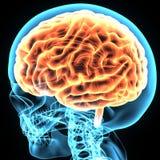 3d ilustracja ciało ludzkie mózg anatomia ilustracji