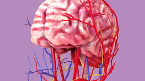 3d ilustracja ciało ludzkie mózg anatomia ilustracja wektor