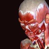 3d ilustracja ciało ludzkie twarzy mięśnie Obraz Royalty Free