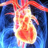 3d ilustracja ciała ludzkiego serca anatomia Zdjęcie Royalty Free