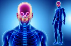 3D ilustracja Cranium, medyczny pojęcie ilustracja wektor