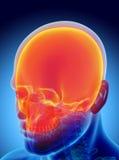 3D ilustracja Cranium, medyczny pojęcie royalty ilustracja