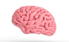 3d ilustracja ludzki mózg odizolowywający w białej 3d ilustraci Obrazy Royalty Free