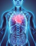 3D ilustracja serce, medyczny pojęcie Zdjęcie Royalty Free