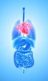 3D ilustracja serce, medyczny pojęcie Obraz Stock