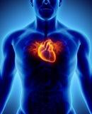 3D ilustracja serce, medyczny pojęcie Ilustracji