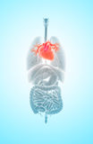 3D ilustracja serce, medyczny pojęcie Obraz Royalty Free