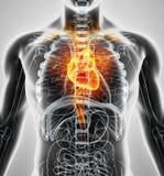 3D ilustracja serce, medyczny pojęcie Fotografia Stock