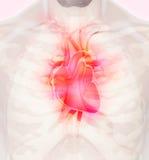 3D ilustracja serce, medyczny pojęcie Zdjęcia Royalty Free