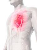 3D ilustracja serce, medyczny pojęcie Zdjęcia Stock