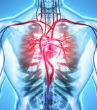 3D ilustracja serce, medyczny pojęcie Obrazy Stock