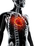 3D ilustracja serce, medyczny pojęcie Obrazy Royalty Free