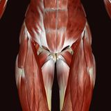 3d ilustracyjny żeński ciało ludzkie Fotografia Stock