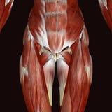 3d ilustracyjny żeński ciało ludzkie Fotografia Royalty Free