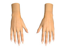 3D image of human hands on white. Background royalty free illustration