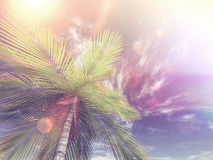 3D image of looking up a palm tree towards the sky Stock Images