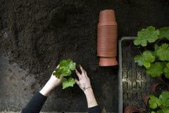 2 d'intérieur de jardinage Images libres de droits