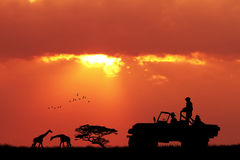 Dżipa safari przy zmierzchem Fotografia Royalty Free
